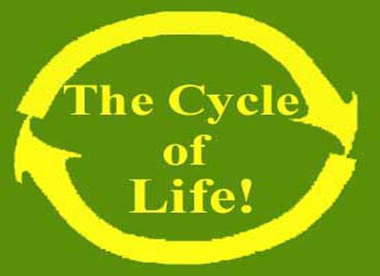 Ο Κύκλος Της Ζωής